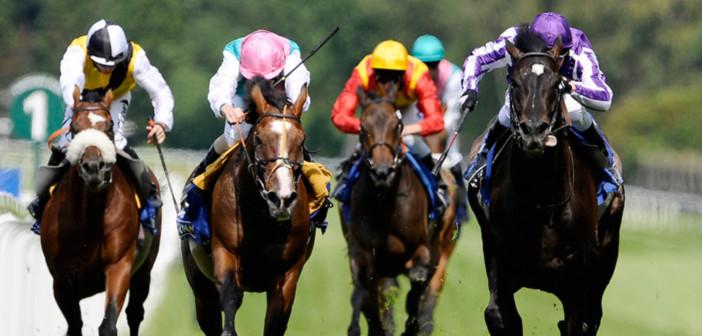 HORSE RACING HEAD ON