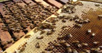 NMRF - Bees