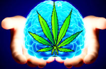 cannabis-2017-forward-12