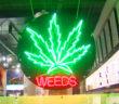 _0000s_0096_cannabis-2017-97