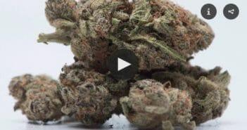cannabis-2018-forward-34