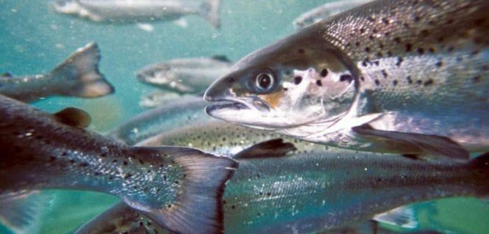 salmon-2018-52