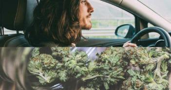cannabis-2018-forward-58